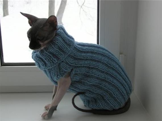свяжем одежду кошке одежда для собак и кошек кошки одежда для
