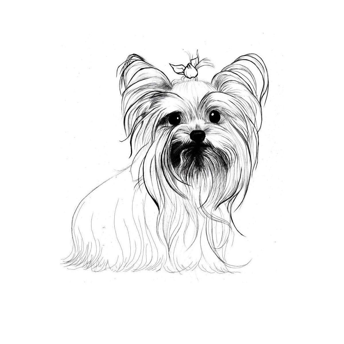 Yorkshire Terrier Coloring Pages Dog Breeds Picture Sketch Coloring Page