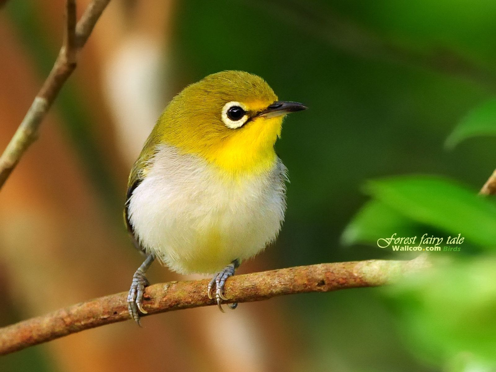 small cute birds hd wallpapers photos wallpaper | beak freak
