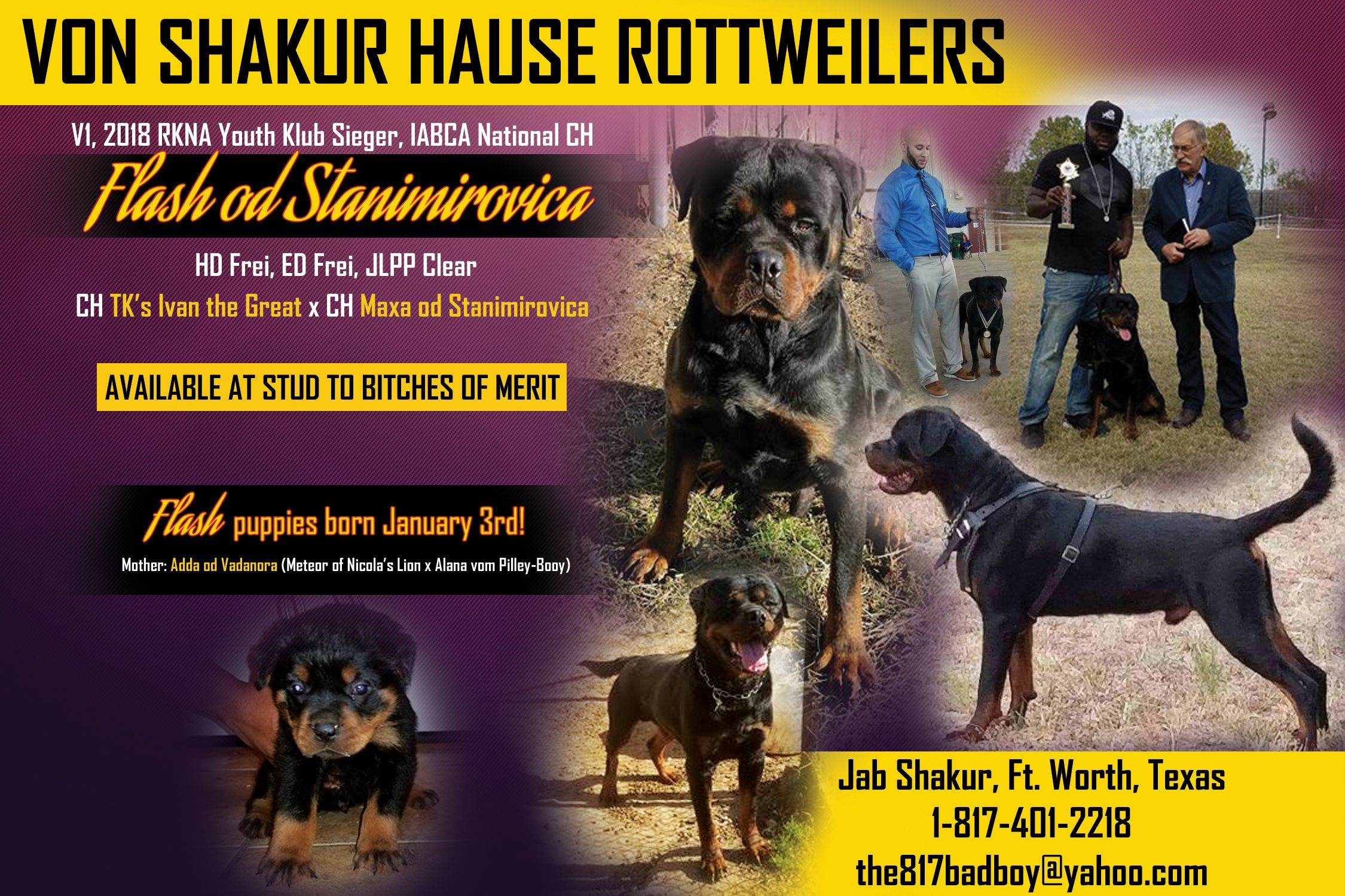 Puppies Are Here Born January 3rd Von Shakur Hause Rottweilers