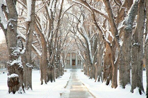 Winter Wonderland Wood oval