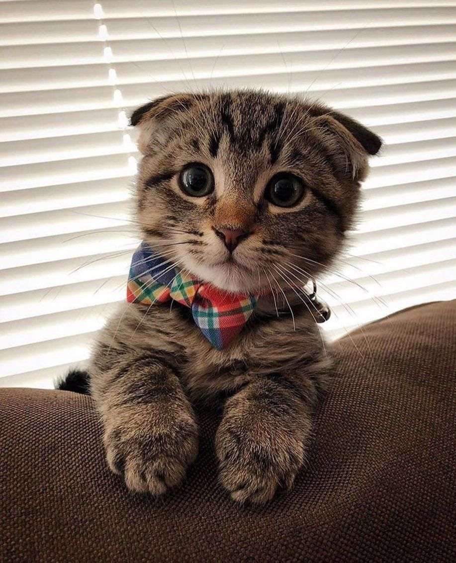 The Cutest Ickle Kitten I Want You Cute Cats Cats And Kittens Cute Animals