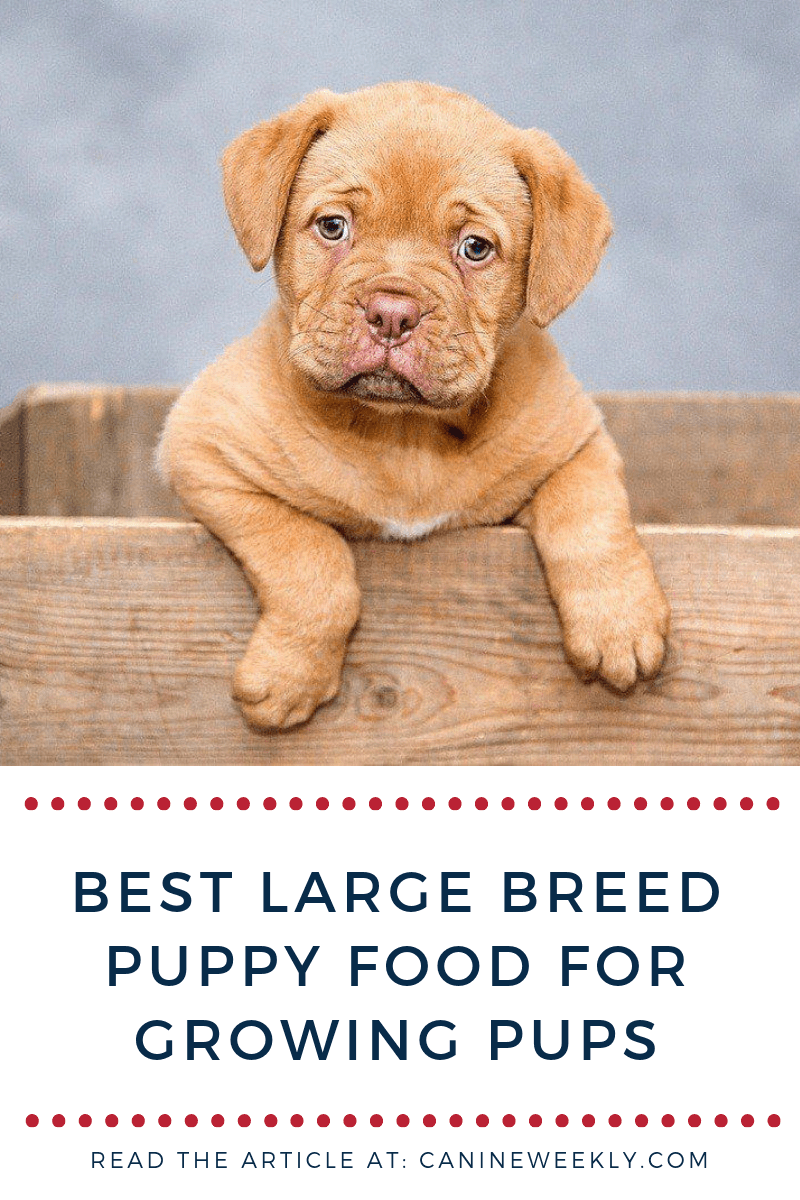 10 Best Large Breed Puppy Food Picks of 2020 Canine