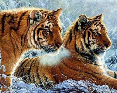 Un couple de tigres ...
