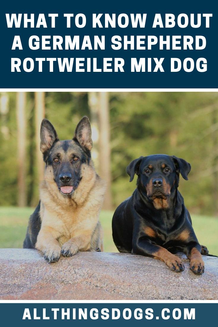 German Shepherd Rottweiler Mix Dog In 2020 German Shepherd Rottweiler Mix Rottweiler Mix Rottweiler Mix Puppies