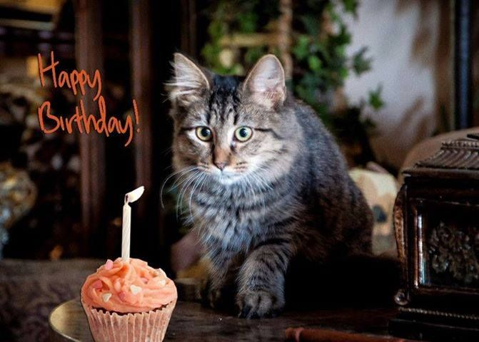 Pin By Inge Mallory On Birthdays Happy Birthday Cards Cat