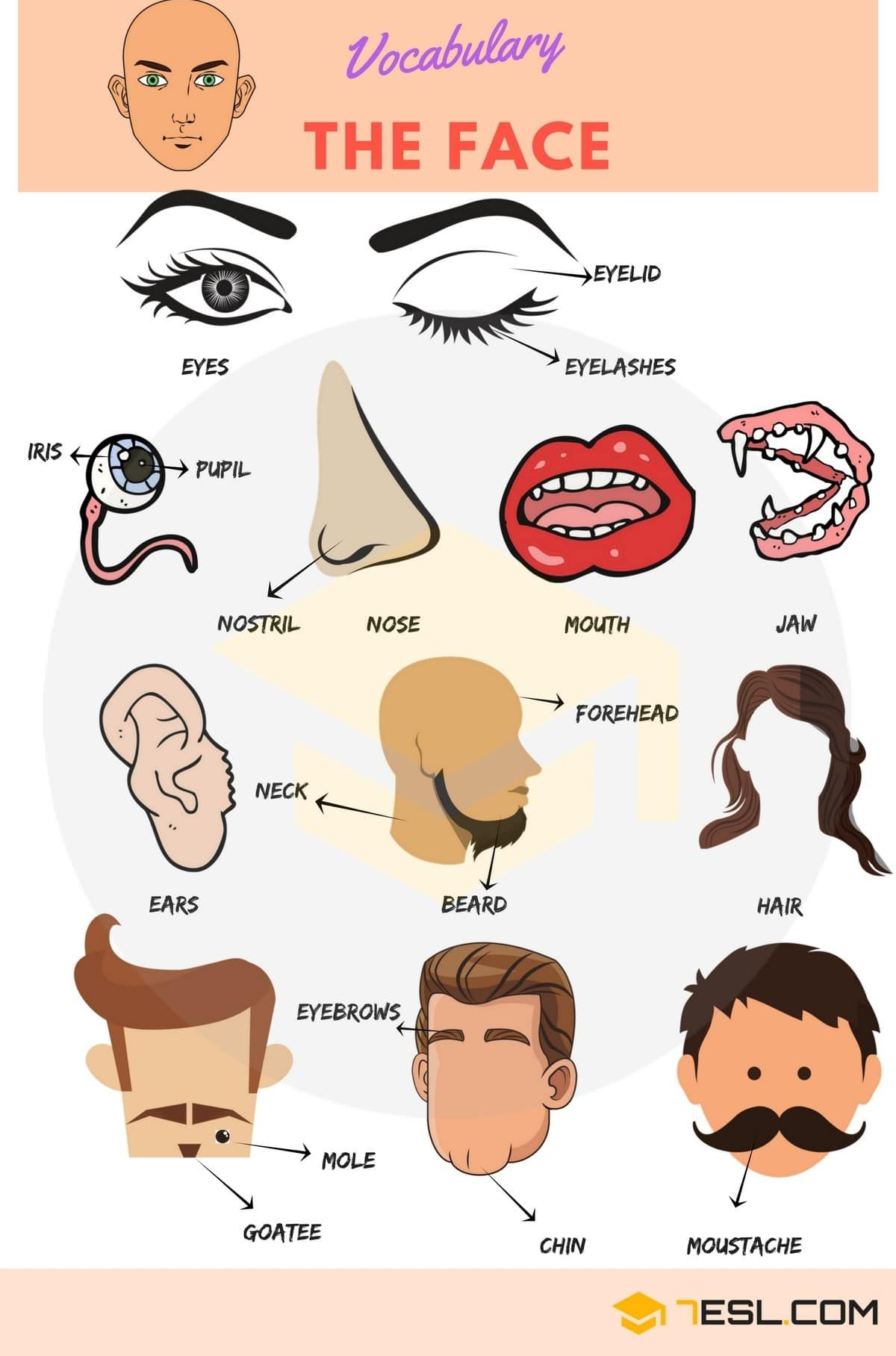 Parts Of The Face Useful Face Parts Names With Pictures
