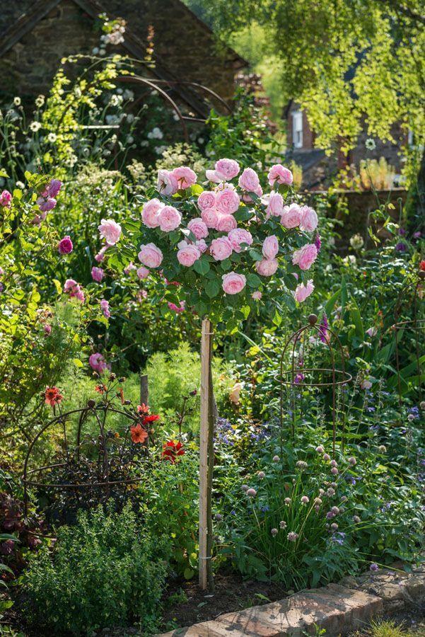Pin By Rita Baller On Gardening Rose Garden Design Garden