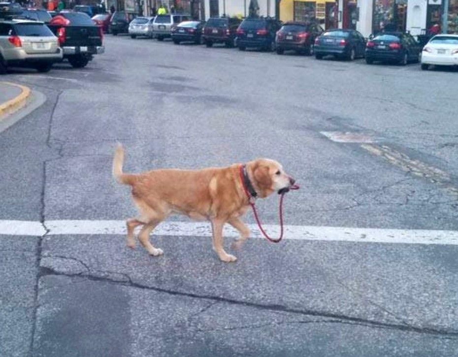 El perro perfecto