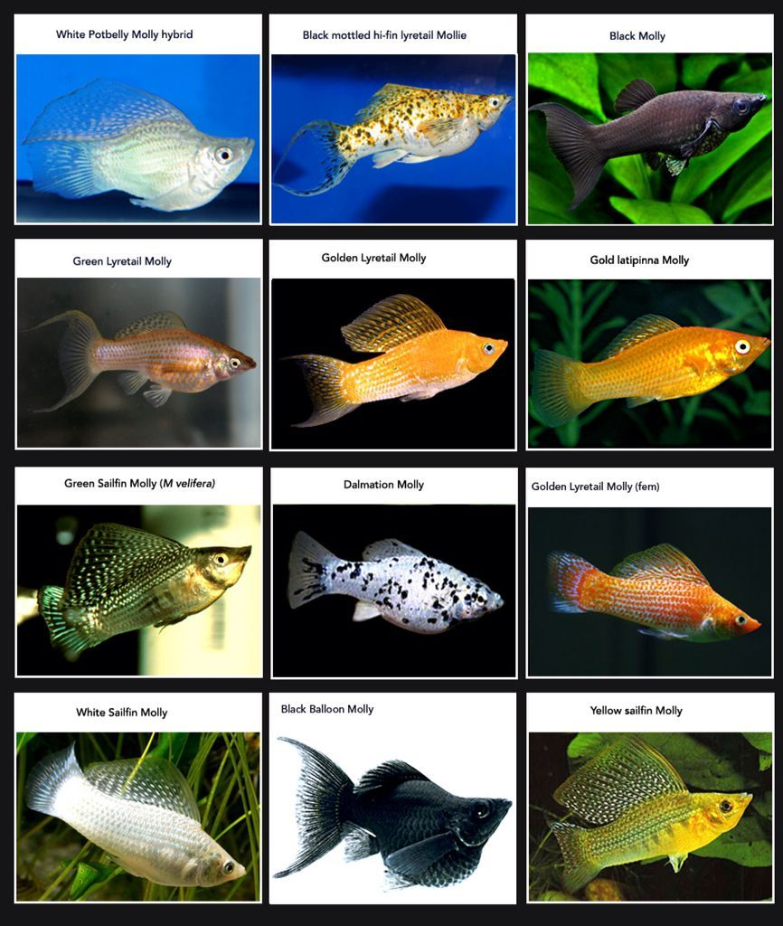 25 Types Of Freshwater Fish For Aquariums In 2020 Aquarium Fish Freshwater Aquarium Fish Tropical Fish Tanks