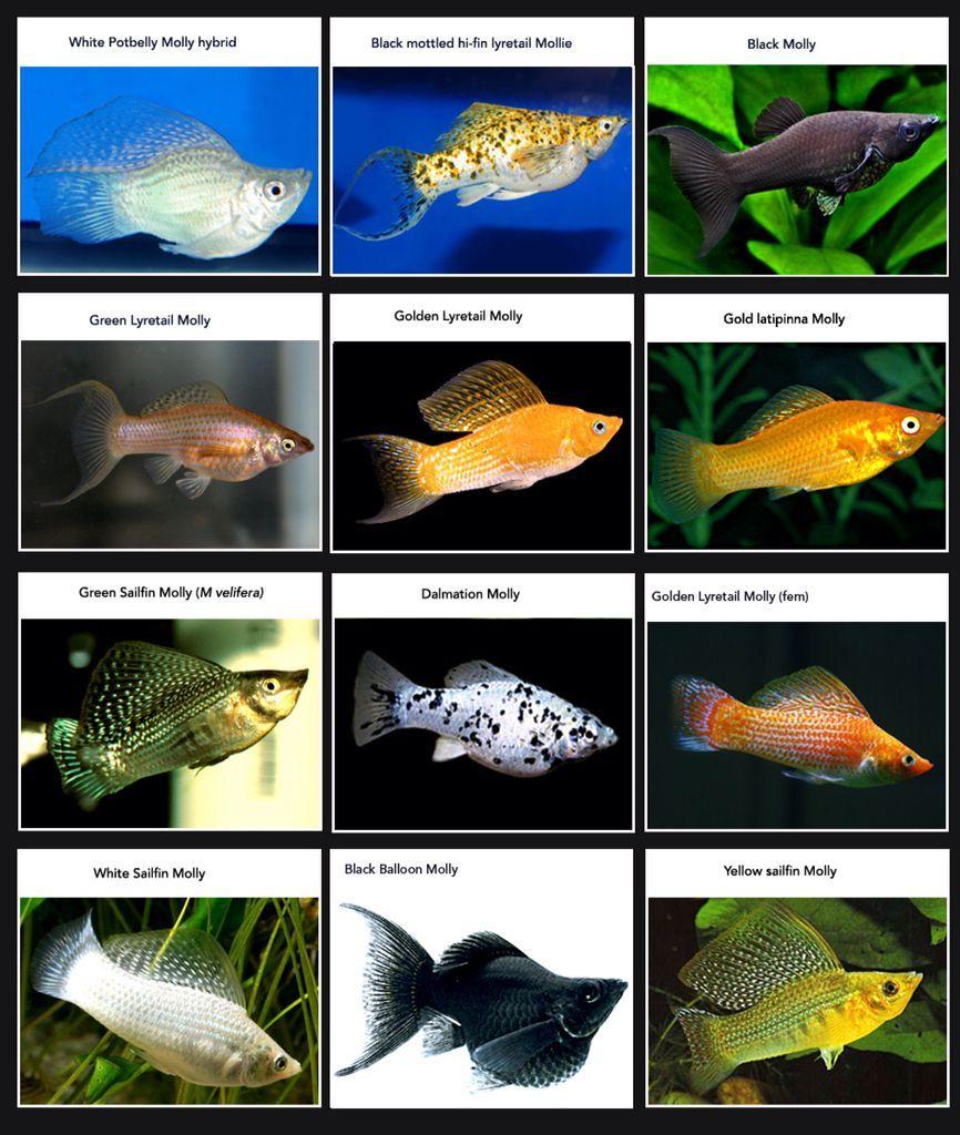 Types Of Freshwater Pet Fish