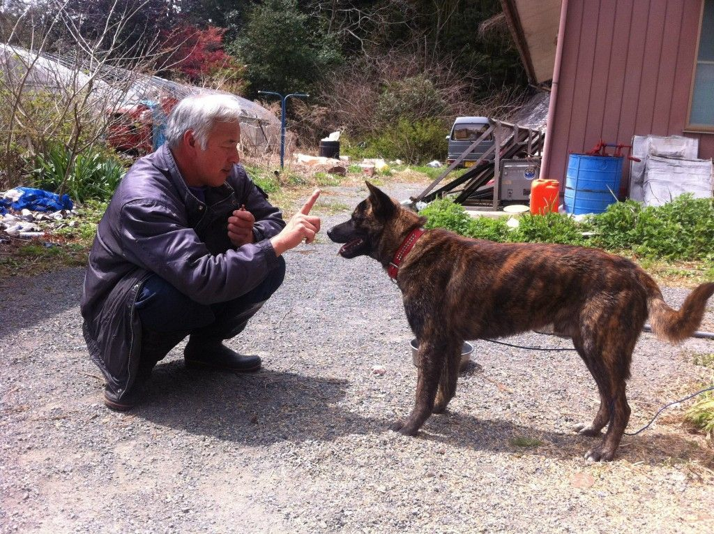 This Man Stayed In Fukushima To Feed The Animals Everyone Else Left Behind