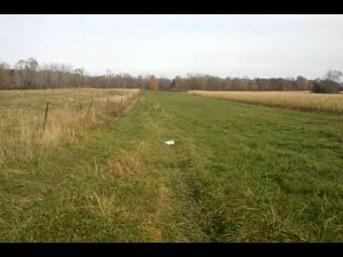 wicked ridge invader test at 50 yards - http://huntingbows.co/wicked-ridge-invader-test-at-50-yards/