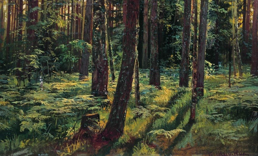 Oil Shishkin Ivan Ivanovich Russia Birch forest with creek summer Hand painted