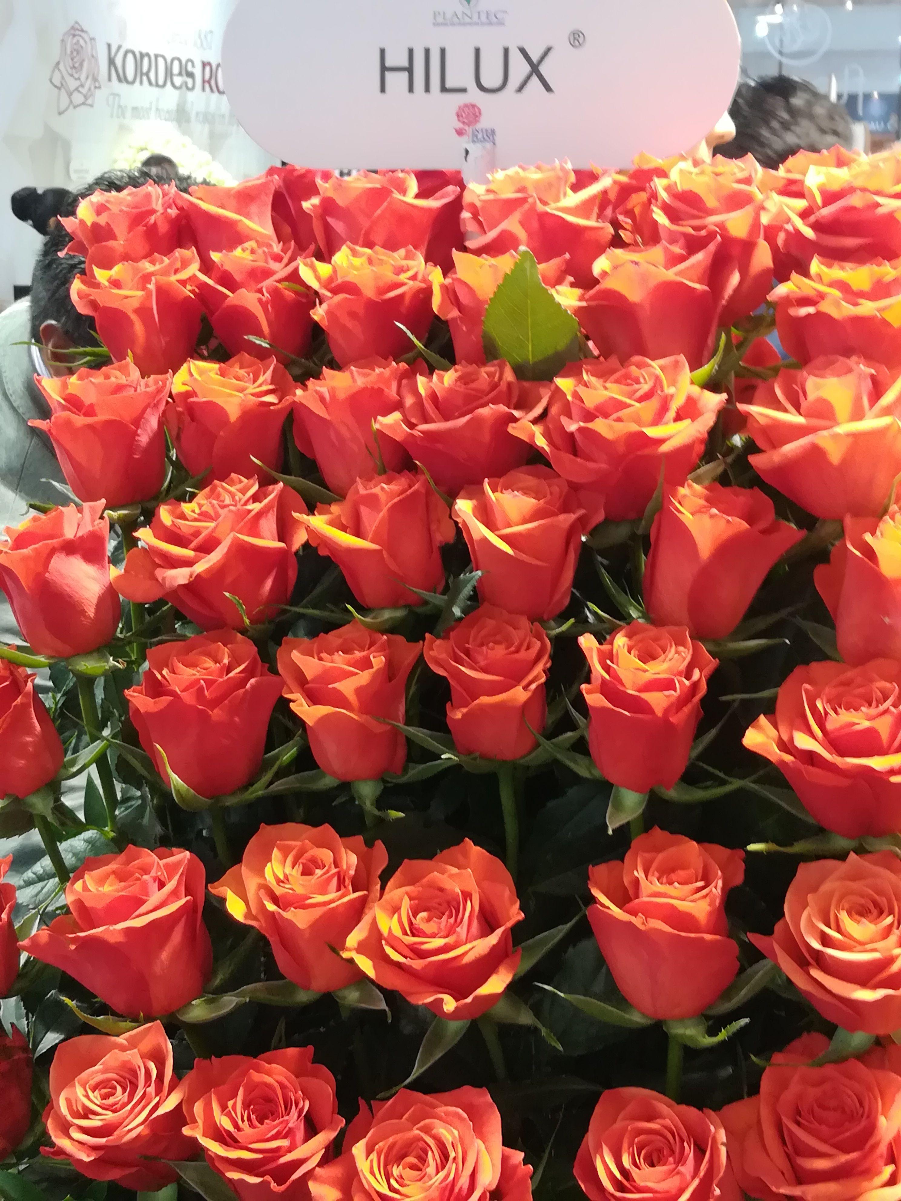 Where to Buy Bulk Flowers Online for Your Wedding  Roses Flowers