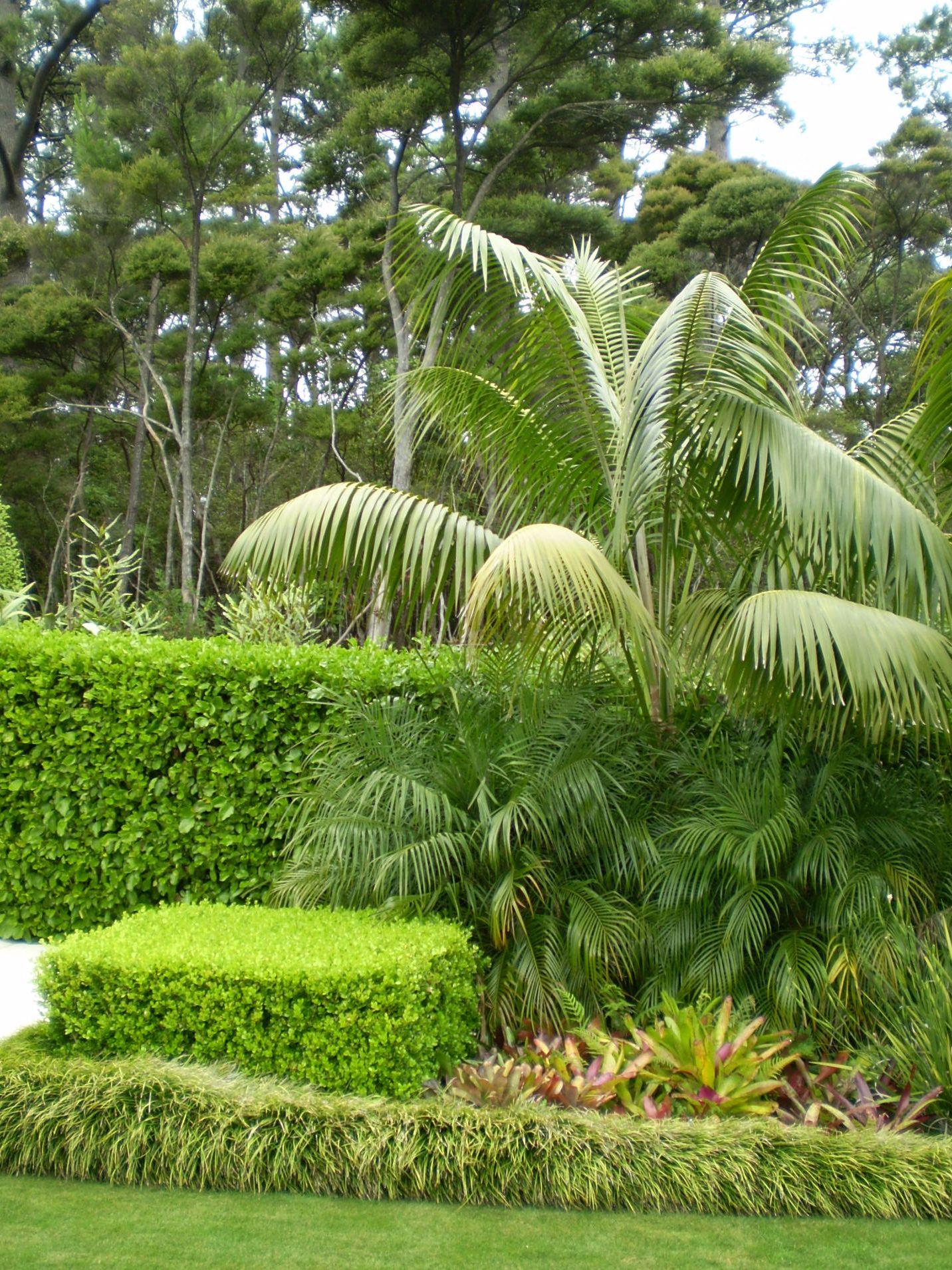 tropical foliage creates textural position under a kentia palm
