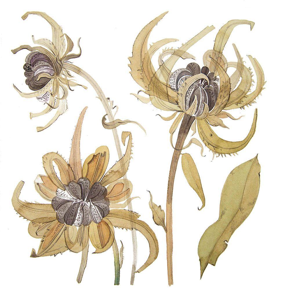 angie lewin -英國女藝術家,(油畫.版畫.雕刻)靈感來自於,植物和地方特色,綠籬和花園-連同素描,和拼貼(第二輯): - ☆平平.淡淡.也是真☆  - ☆☆milk 平平。淡淡。也是真 ☆☆