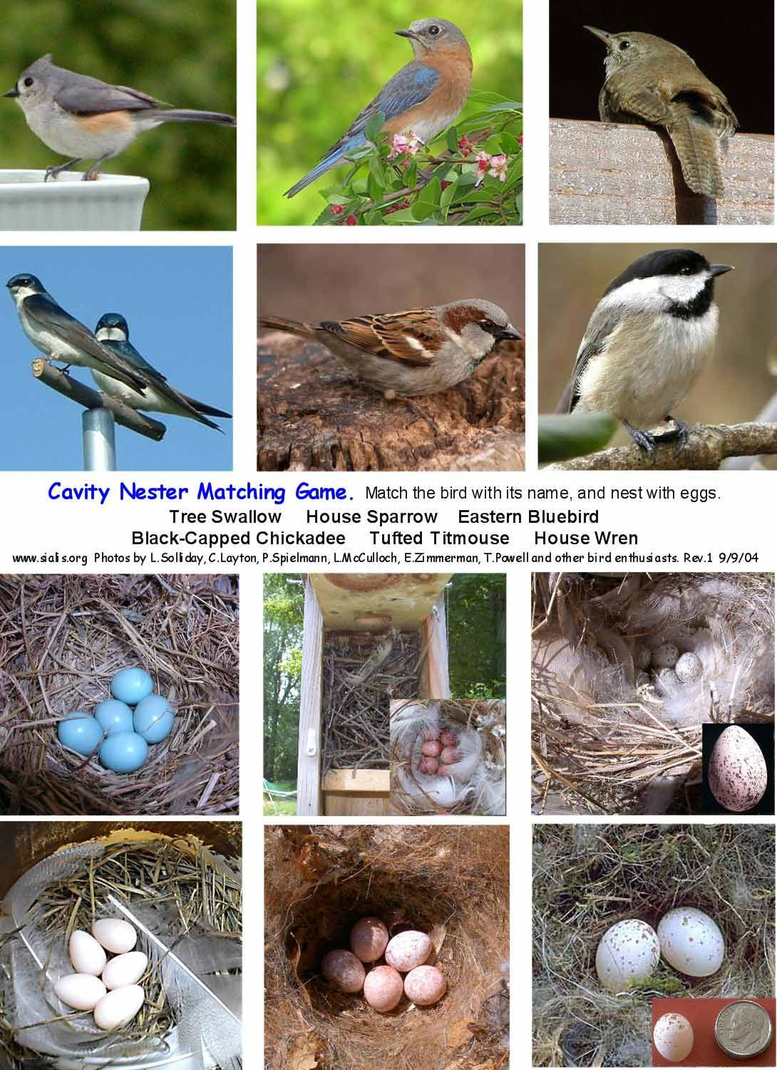 Pin By Mary Tuttle On Unit Study Birds