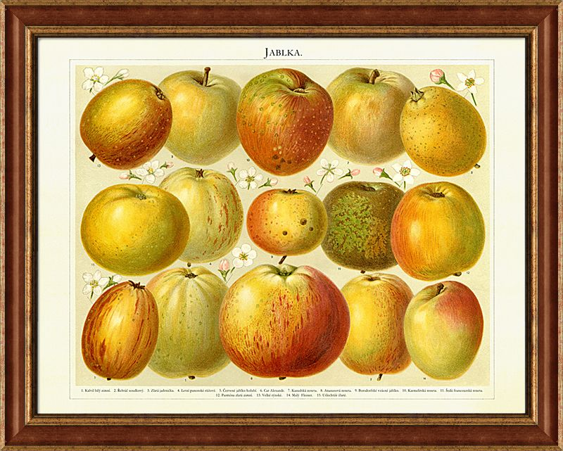 Jablka Darky Obrazy Vintage Vintage Nabytek Retro Originalni