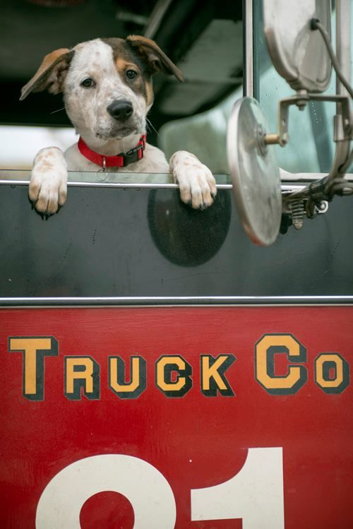Pouch Fire House Dog Chicago Fire Chicago Fire Department Dogs