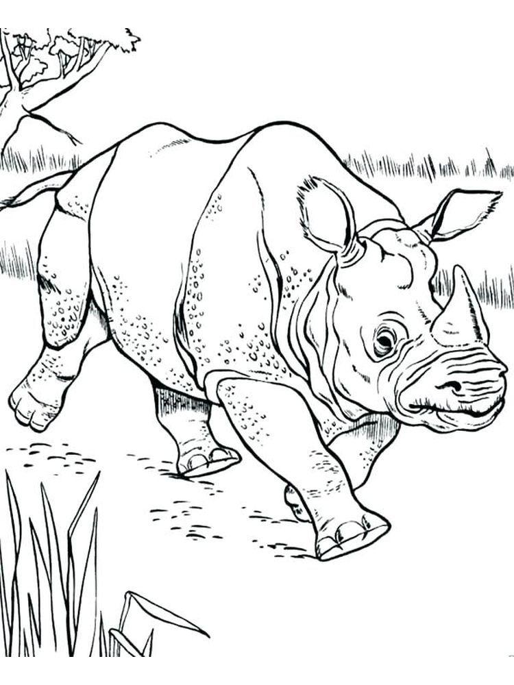 Rhinoceros Beetle Coloring Page. Rhinoceros are large ...