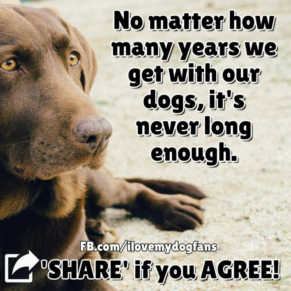 Quotes About Dogs And Friendship Pinsarah Ressel On Nika  Pinterest  Dog