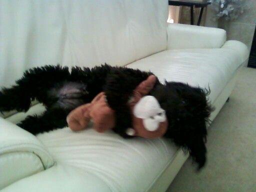 I luv my monkey♡