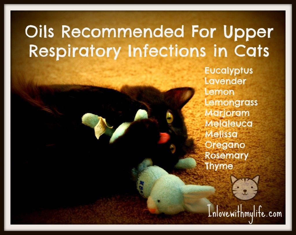 Cat Sneezing Respiratory Infections Allergens And Other Causes