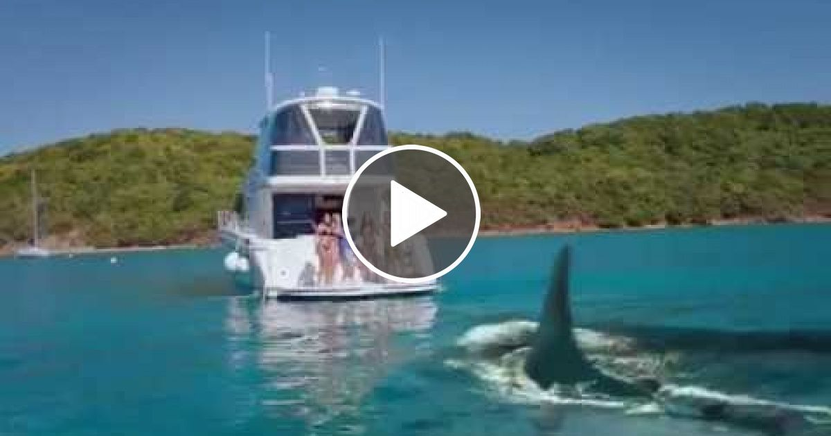 5 Headed Shark 2017 Latest Movie Trailer