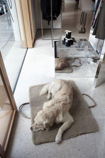 Janne Peters Hamburg Hundeprodukte Hundetasche Fotografin