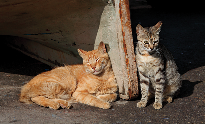 Controlling Feral Cat Colonies Feral cats, Cats, Alley