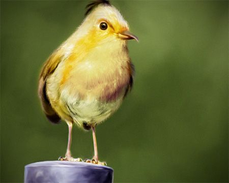 Mohamed Raoof Made A Realistic Blend Of Real Photos With Templates Angry Birds That It Is Hard Not To Believe They Are