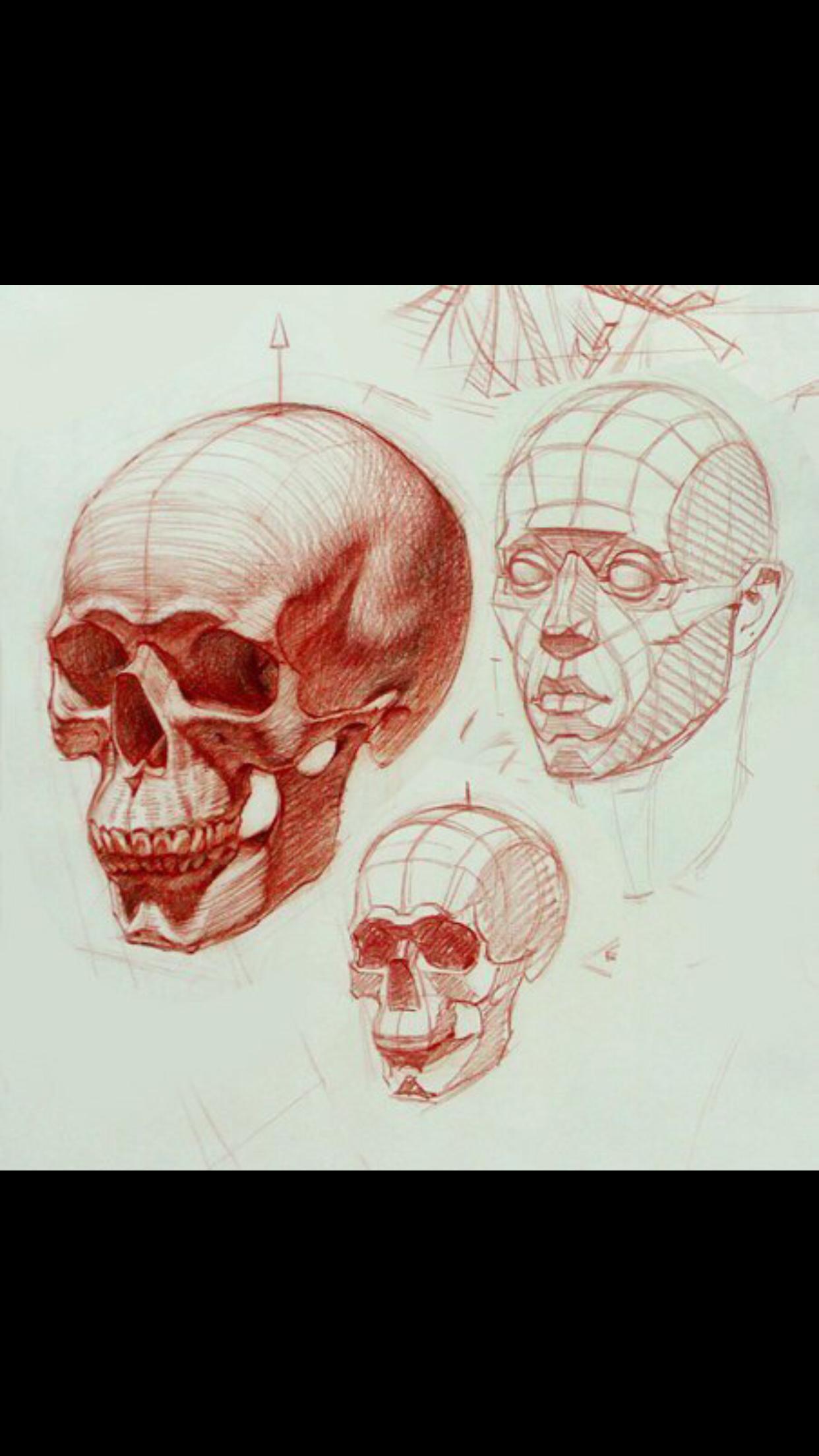 Pin by Annenkova Marie on Анатомия | Pinterest | Drawings