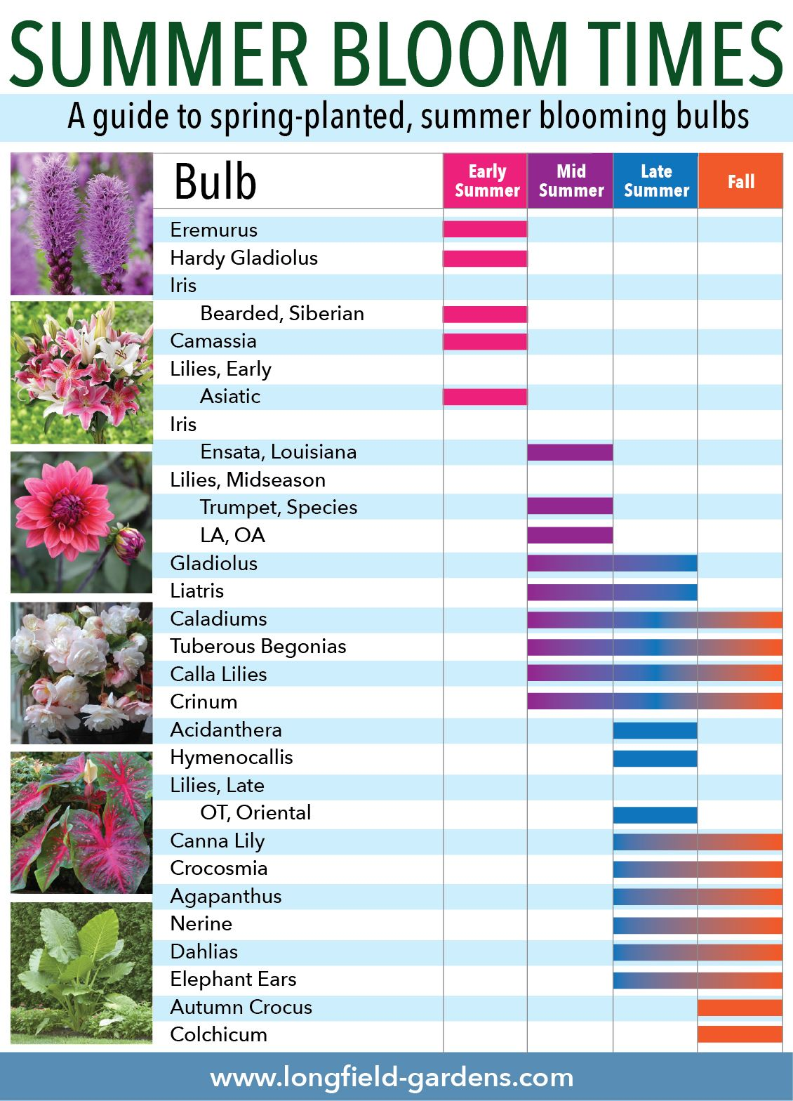 Flower Bulbs Make It Easy To Fill Your Yard And Garden With Color From Early Spring Through Fall By Choosing Bulbs Tha Summer Bulbs Bulb Flowers Spring Plants