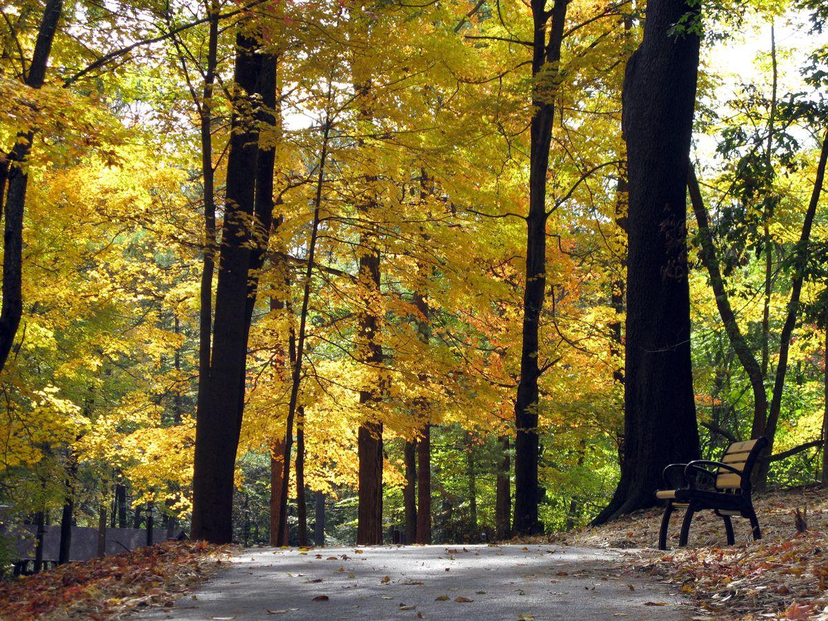 pinemt best park cabins pine state parks resort kentucky ky oglebay mountain