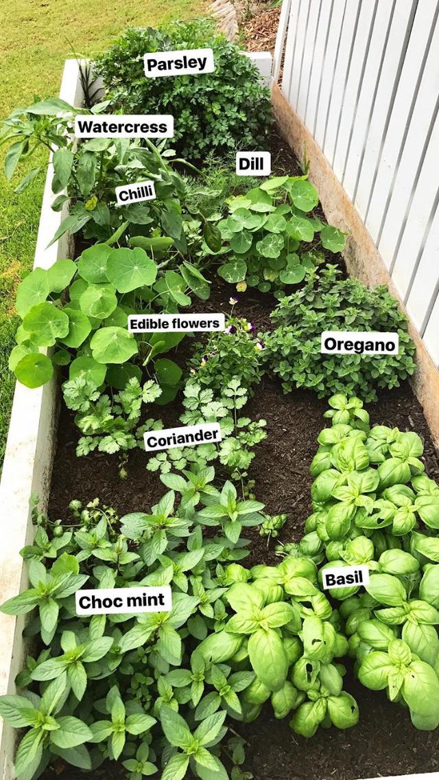 potager parfait pour vivre en autosuffisance - Jardin Permaculture