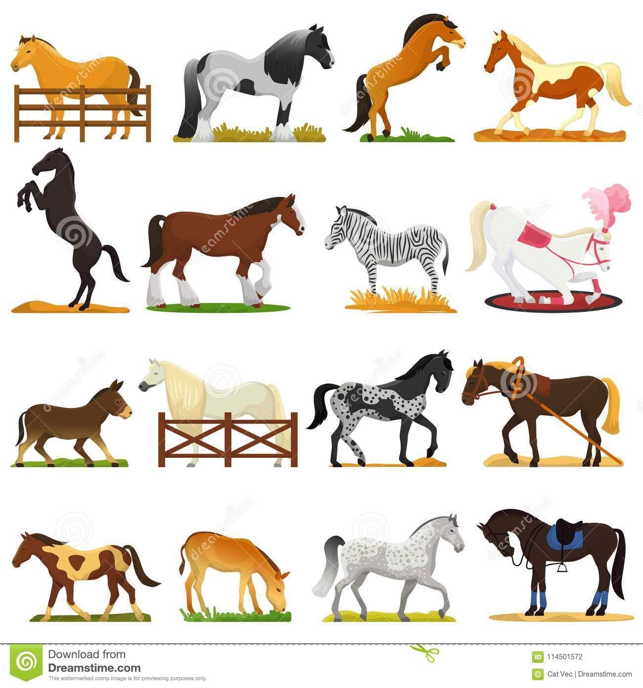 Breeding Equine