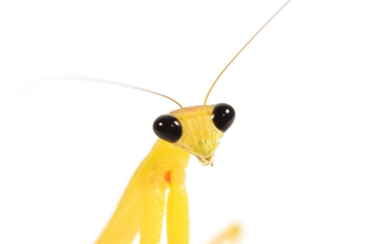 Lujo Anatomía De La Pierna De Insectos Inspiración - Imágenes de ...