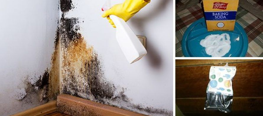 6 Easy Ways To Remove Mold Naturally Distilled white