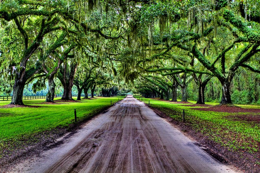 These Pecan Trees were planted in the late 1800's and can
