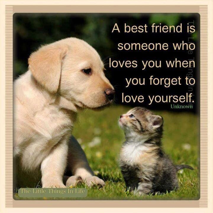 Friendship Quotes Best Friends Animal Quotes Friendship Animals - Dogs annoying cats with friendship