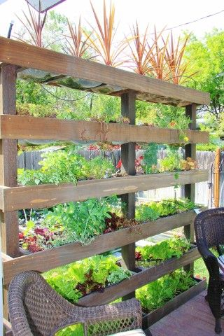 Plant Wall Outdoor Divider Herb Garden With Images Vertical