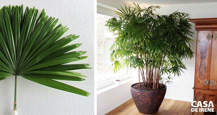 20 Plantas que Vivem Dentro de Casa Plantas, Plantas de sombra y