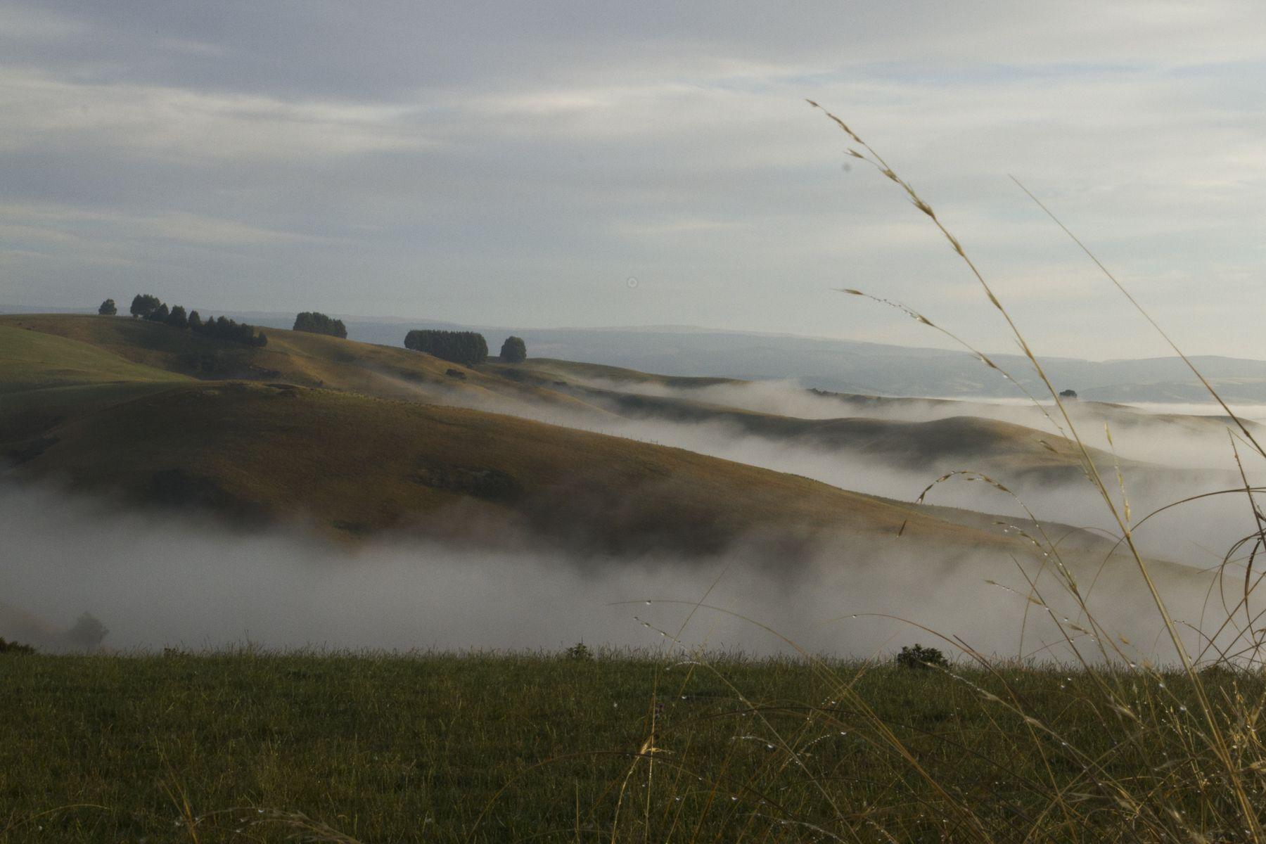 South Otago