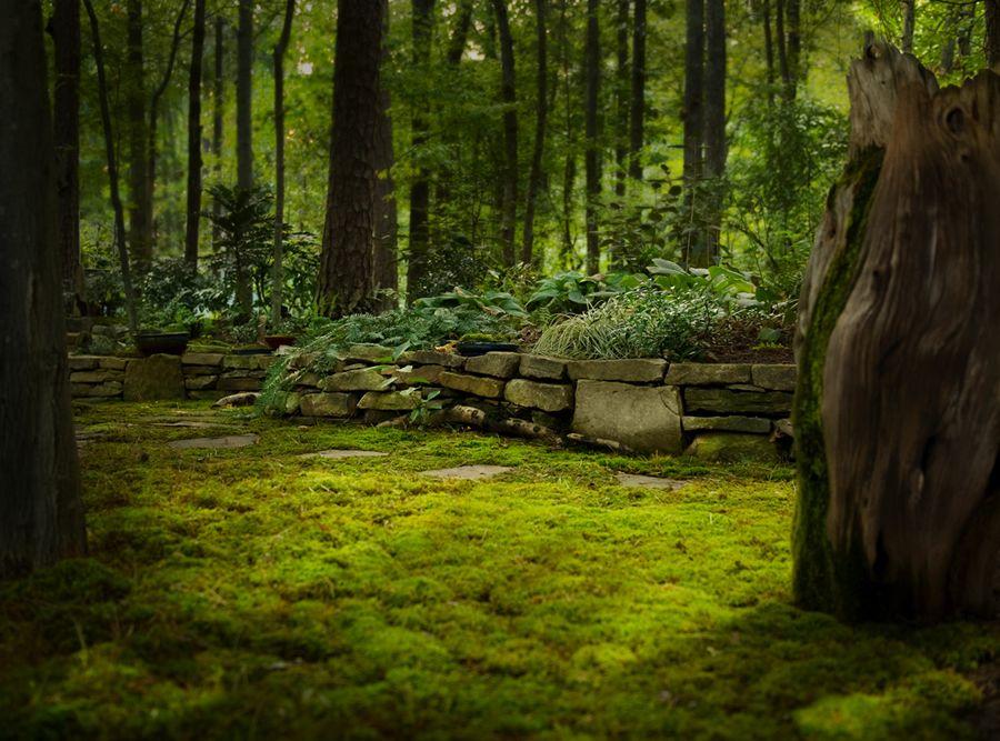 Image result for moss garden