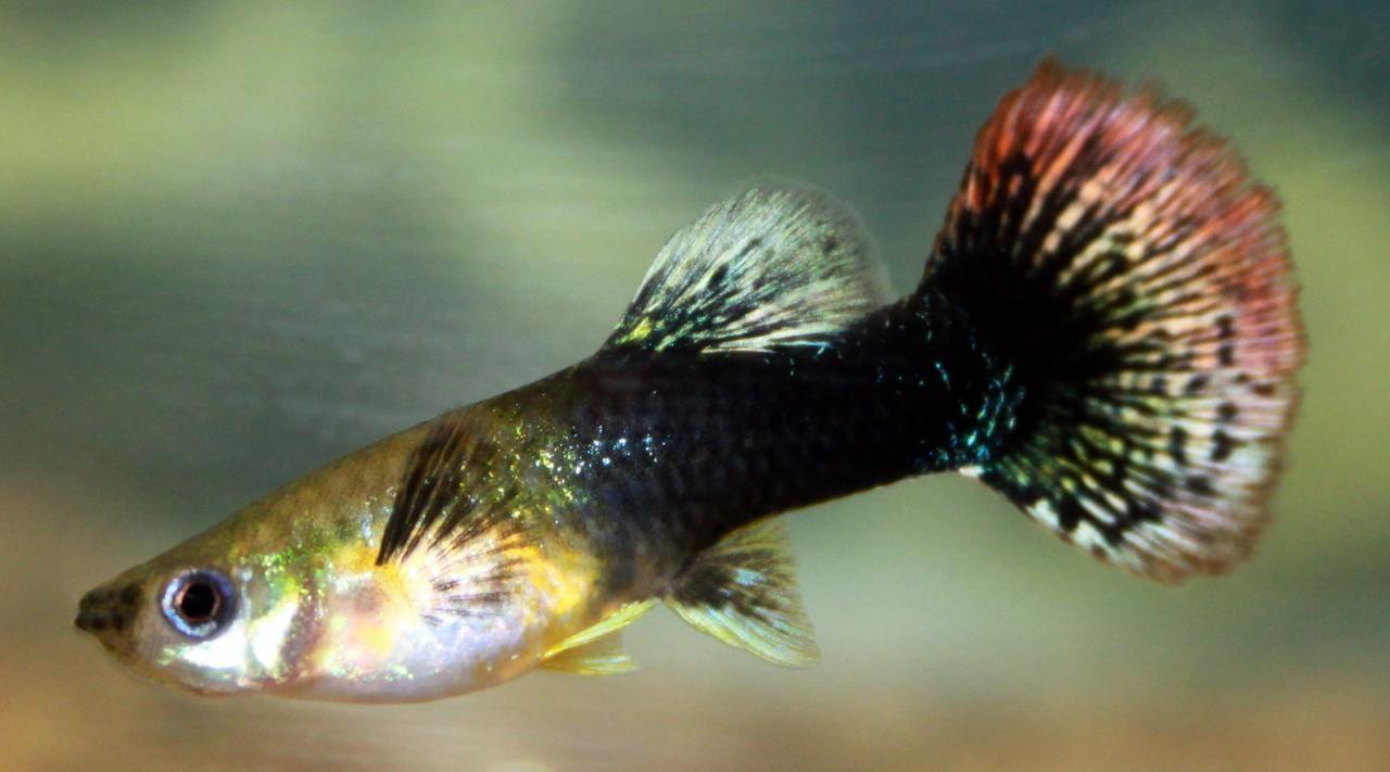 Todas las especies de peces de agua dulce peces de for Peces agua dulce