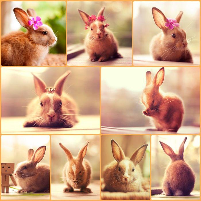 Gluckliche Kaninchen Stehen Vor Der Kamera Kaninchen Kaninchen Bilder Hauskaninchen