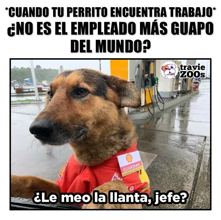 Ejemplo De Lucha Perros Lindos Perrito Fotos De Animales