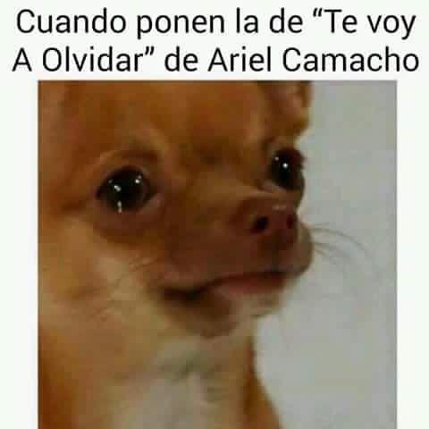 Te Voy A Olvidar! #ArielCamacho