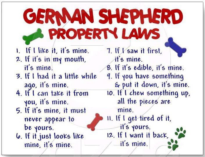 for dog owners :)